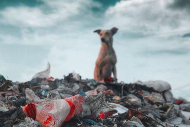 Waste Removal Quail Ridge Florida