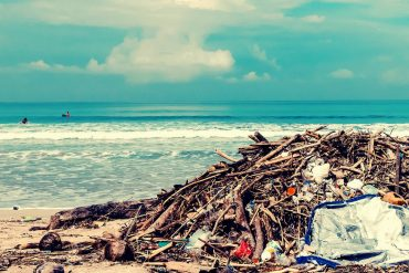 Waste Removal Princeton Florida